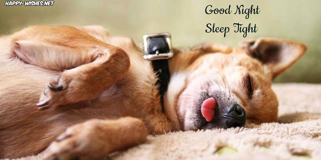 Good night sleep tight funny good night images sleeping