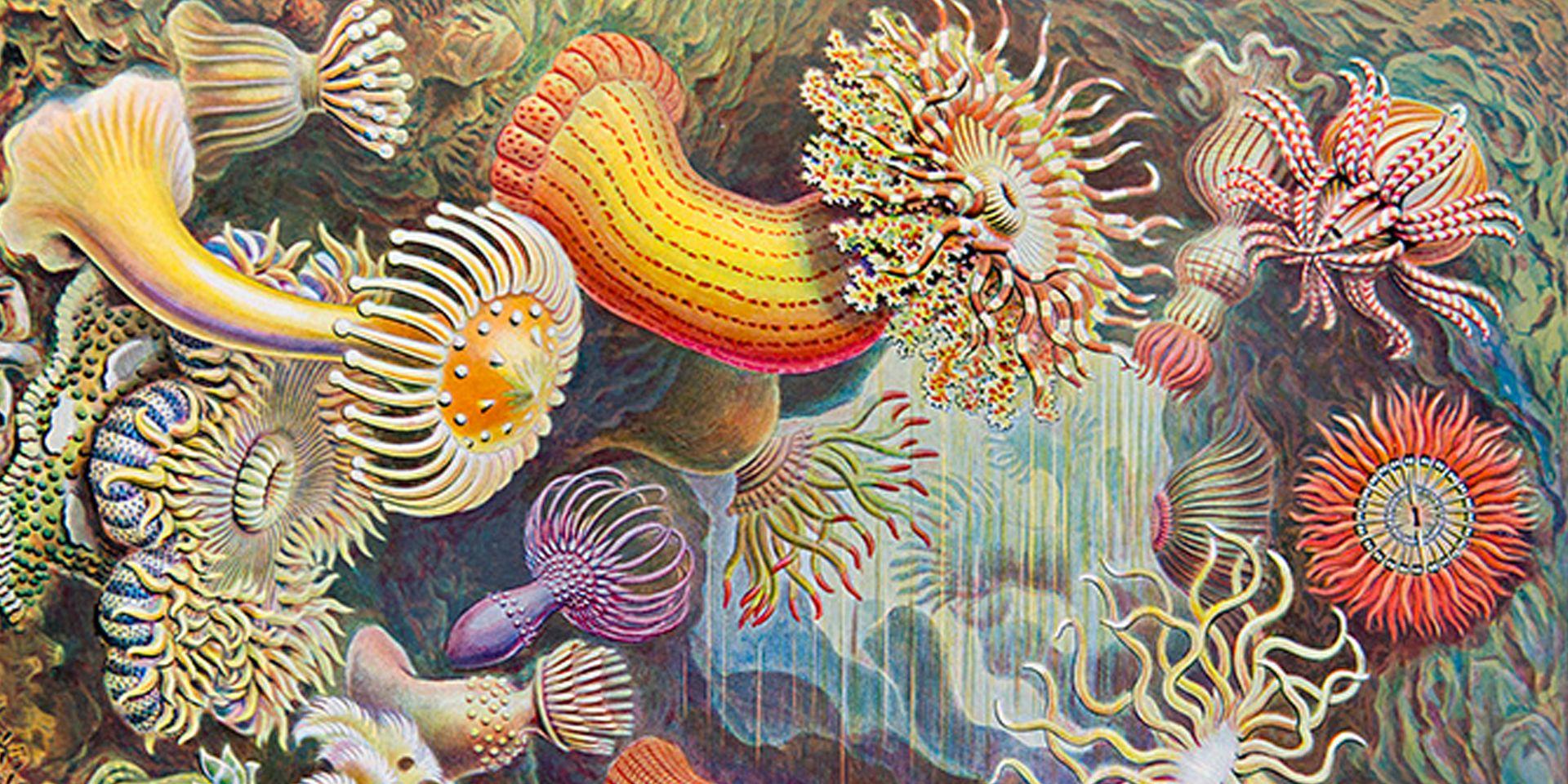 Pin On Dissertation Topics Marine Biology Ideas