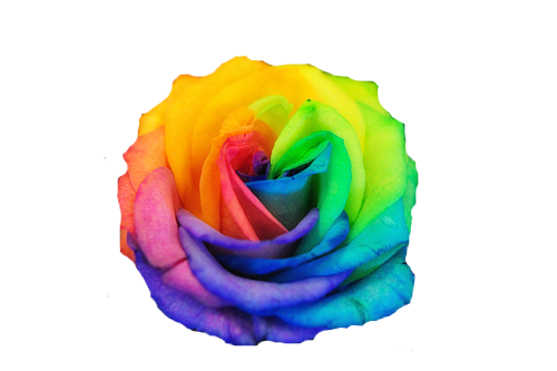 Rainbow roses image by Funky Aesthetics on Aesthetic: Rainbow | Color, Beautiful roses