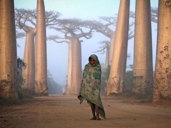 Africa   Girl and Baobabs, Madagascar © Ken Thorne   Near the city of Morondava on the west coast of Madagascar lies an ancient forest of baobab trees. Unique to Madagascar, the endemic species is sacred to the Malagasy people, and rightly so. Walking amongst these giants is like nothing else on this planet. Some of the trees here are over a thousand years old. It is a spiritual place, almost magical.