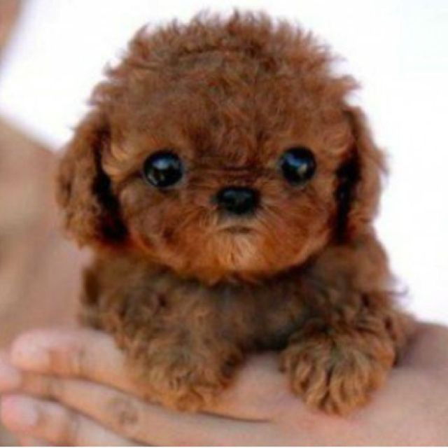 this puppy is adorable, i want it