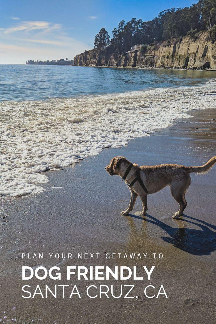 Planning A Trip To Dog Friendly Santa Cruz Traveling Nine To