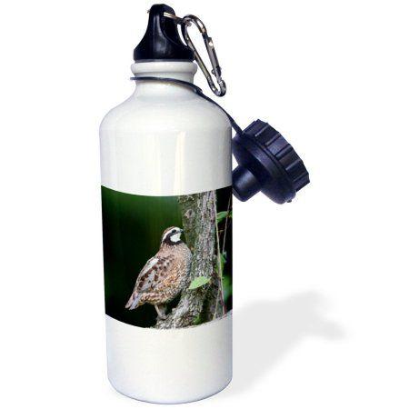 3dRose Northern Bobwhite quail male calling, Marion Co. IL, Sports Water Bottle, 21oz, White