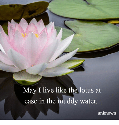 Pin by tisiphone erinys on truths to remember pinterest lotus may i live like the lotus at ease in the muddy water unknown mightylinksfo
