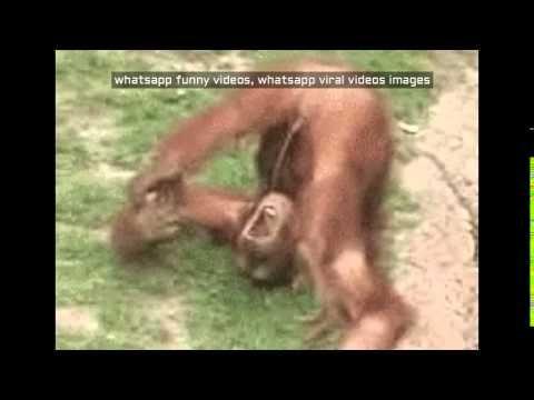 Megan qt nude pics