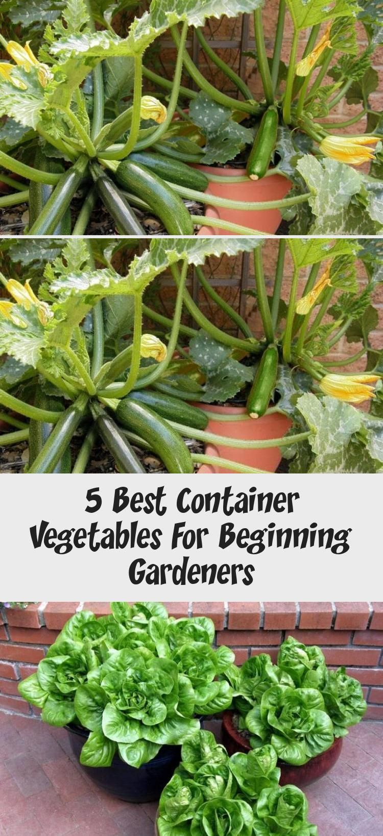These Are The 5 Best Vegetables To Grow In Containers You Can
