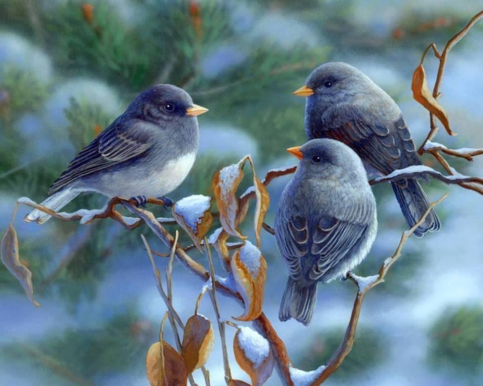 съемок три птички картинки актуальны зависят объема