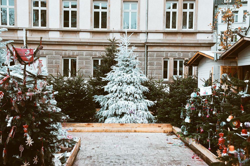 Stunning Merry Christmas Images   Christmas tree ...