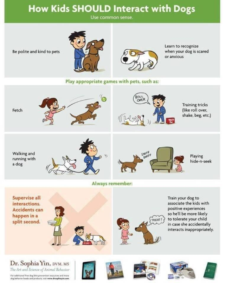 How kids SHOULD interact with dogs! | Dog Body Language | Pinterest ...