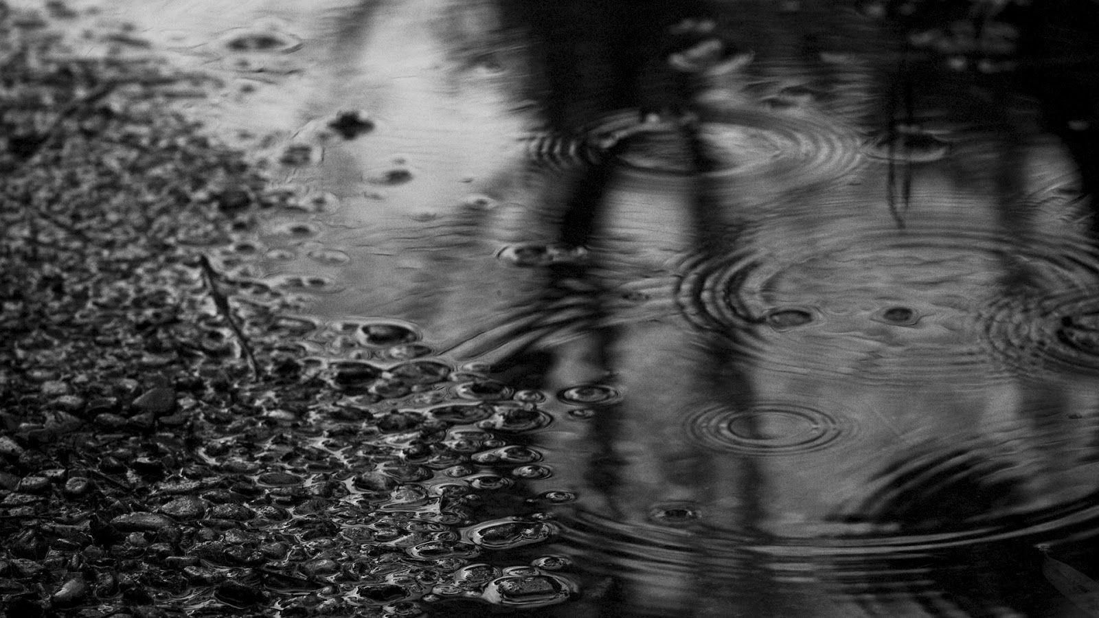 Resultado de imagen de lluvia pelo mojado
