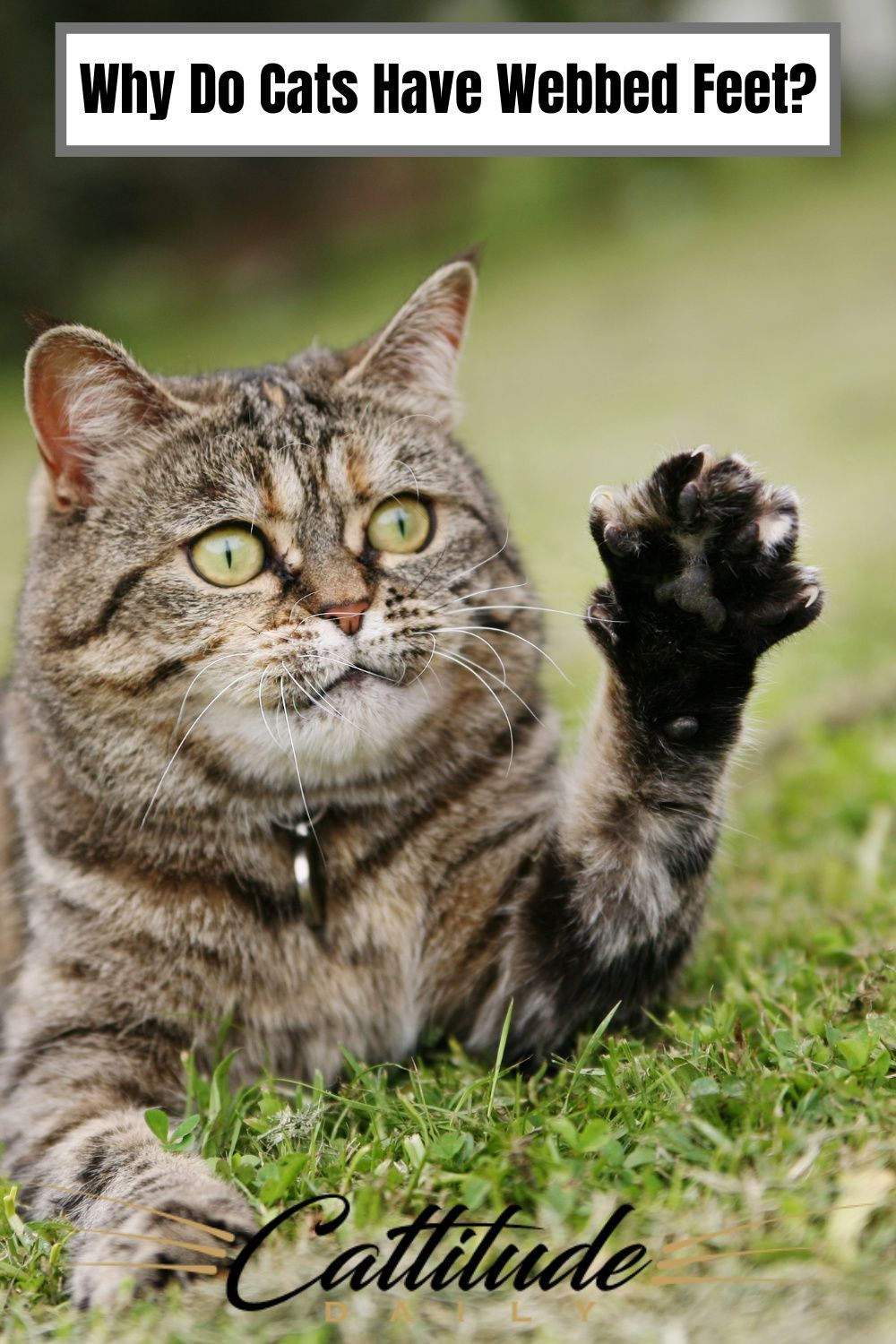 Why Do Cats Have Webbed Feet In 2020 Cats Cat Facts Funny Cat Problems