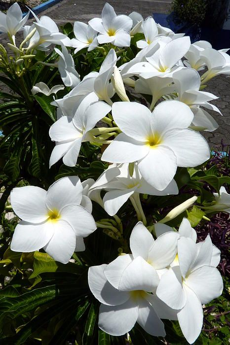 pictures of flowers in white - Google Search | WHITE ON WHITE ...