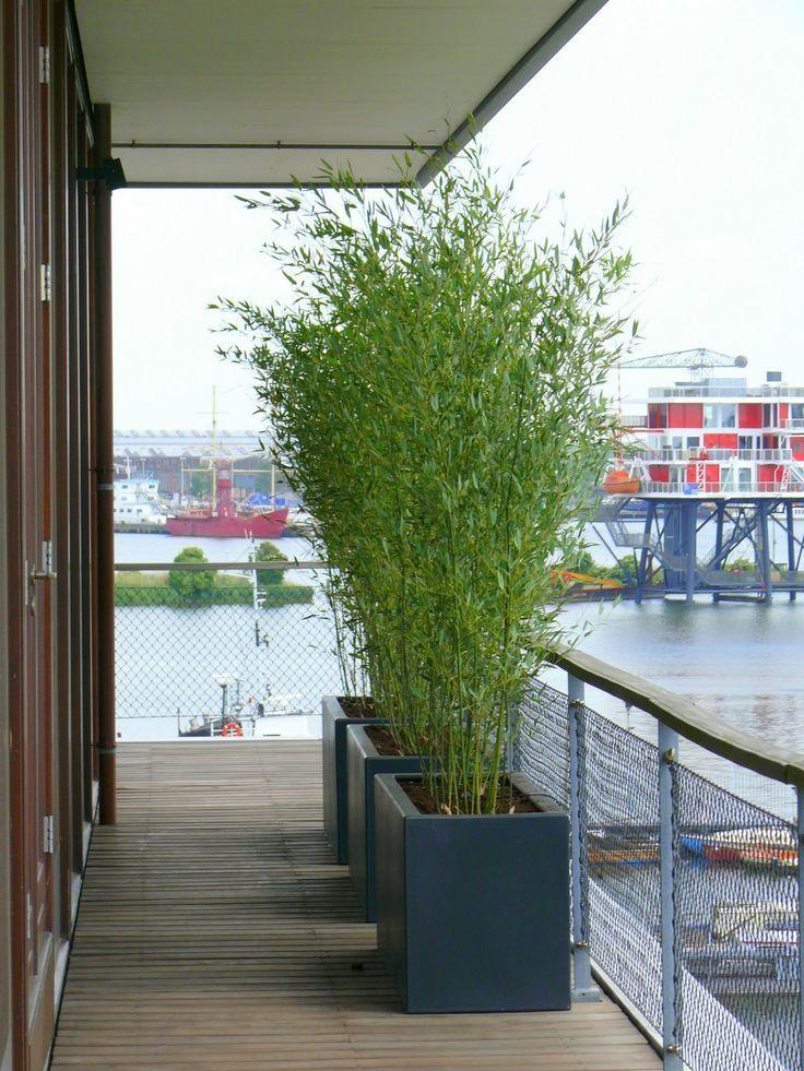 Terras veranda , #terras #veranda #sichtschutzpflanzen