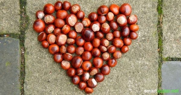 12 Kastanien Anwendungen Zum Verlieben Selber Machen Kastanien Rezept Und Haushalts Tipps