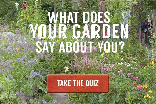 What Does Your Garden Say About You Quiz Container Gardening