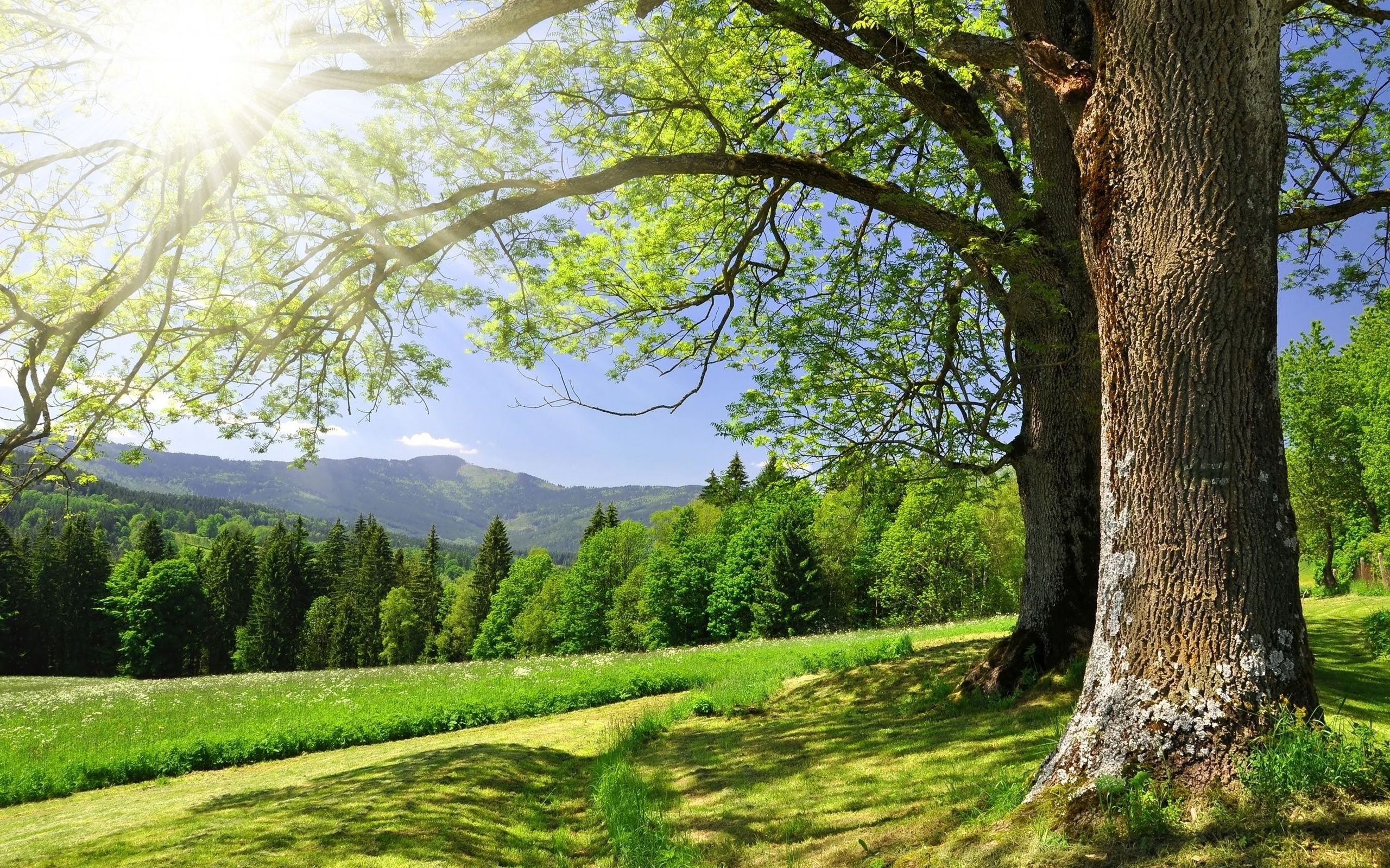 This Website Is Currently Unavailable Nature Landscape Trees Beautiful Landscapes