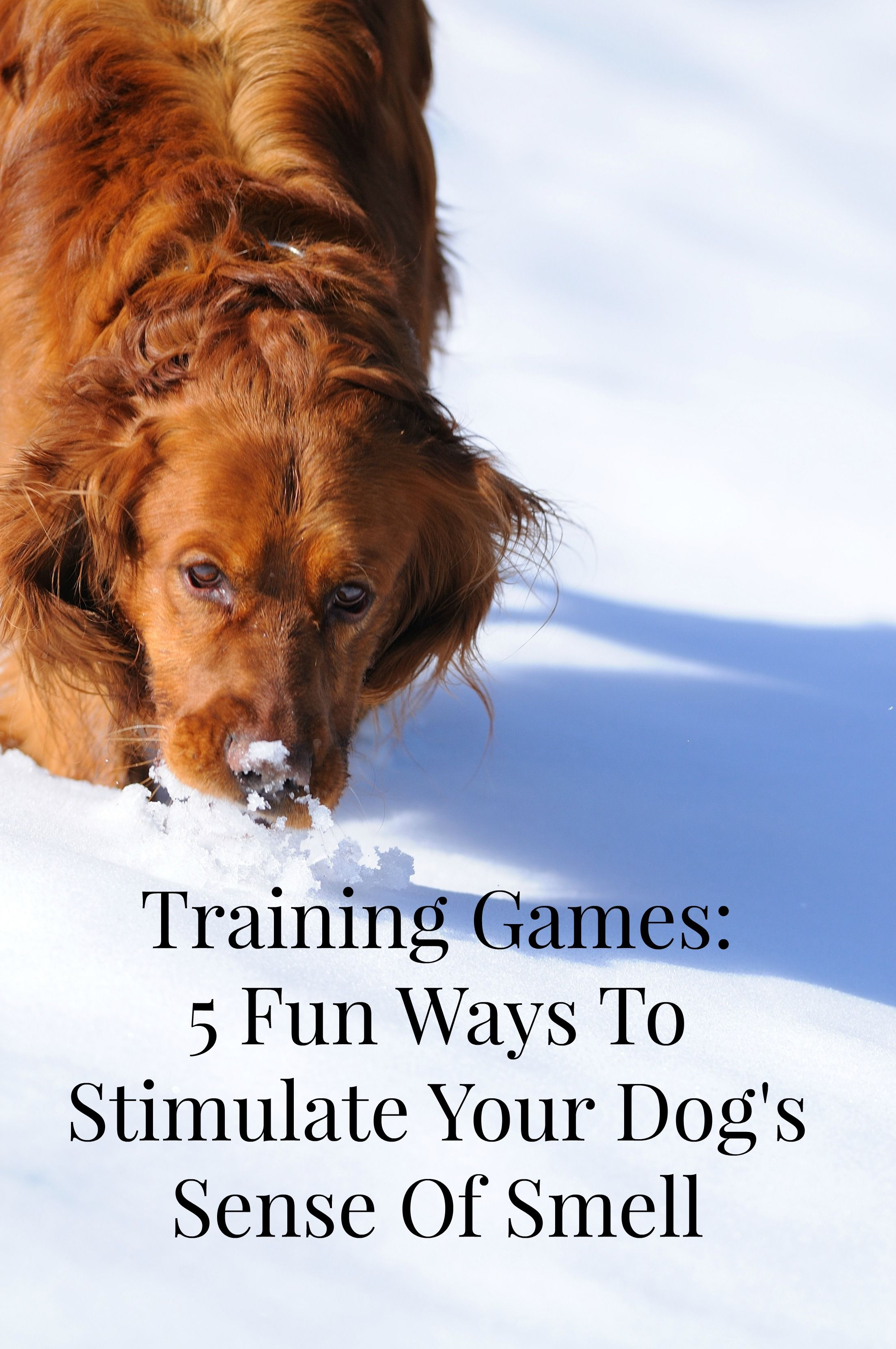 Training Games To Stimulate Your Dog S Sense Of Smell Dog