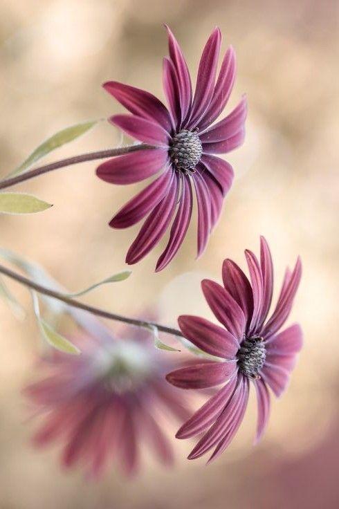 Flowers #schöneblumen