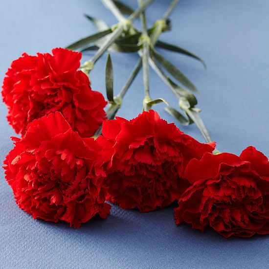 These Are The Meanings Behind The Most Popular Valentine S Day Flowers Anniversary Flowers Flower Meanings Romantic Flowers