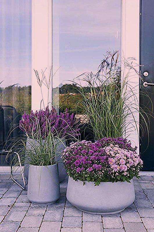 Photo of großes Ziergras anmutig und dekorativ – Garten Herbst Idee