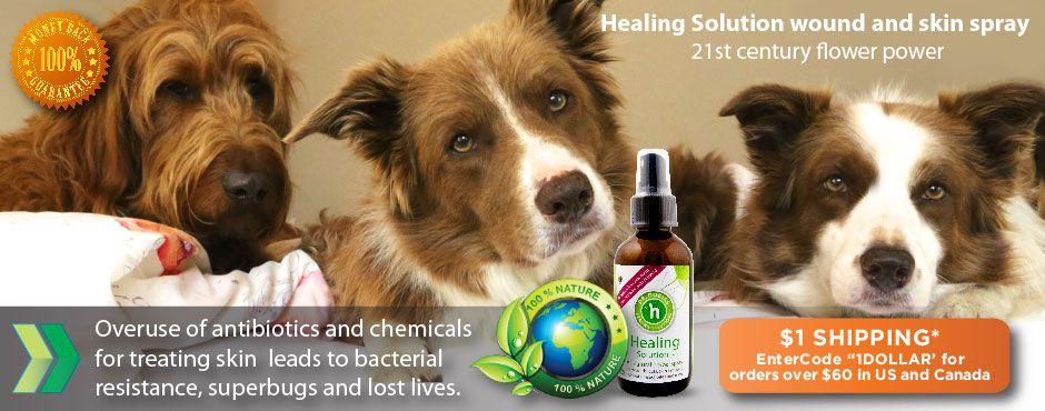 Holistic Veterinarian Natural Pet Care Dog Health Care Natural Dog Health