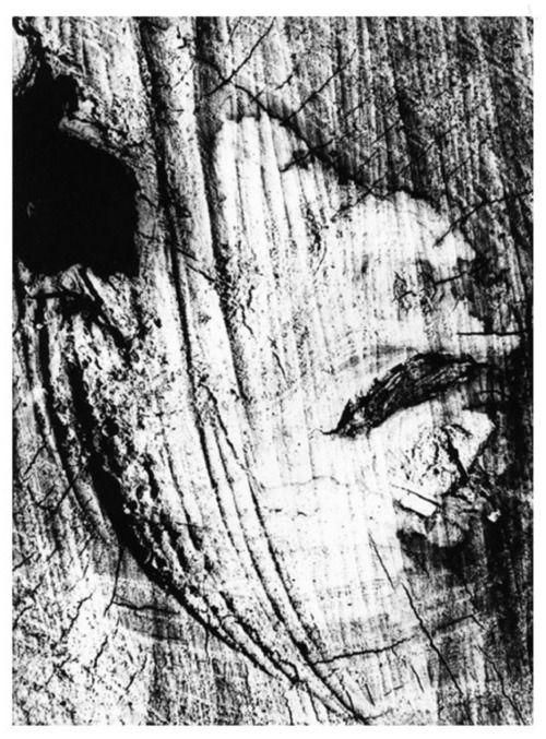 Motivo suggerito dal taglio dell'albero (1967/69) © Archivio Mario Giacomelli – Sassoferrato | Rita Giacomelli