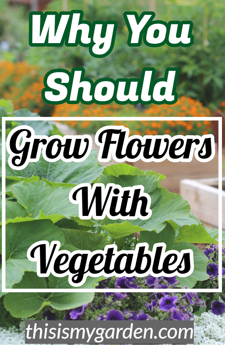 Why it's so important to grow flowers with your vegetable garden.  #insect #control #companion #planting #garden #landscape #marigolds #nasturtium #allysum #vegetable #tips #thisismygarden #marigoldsingarden