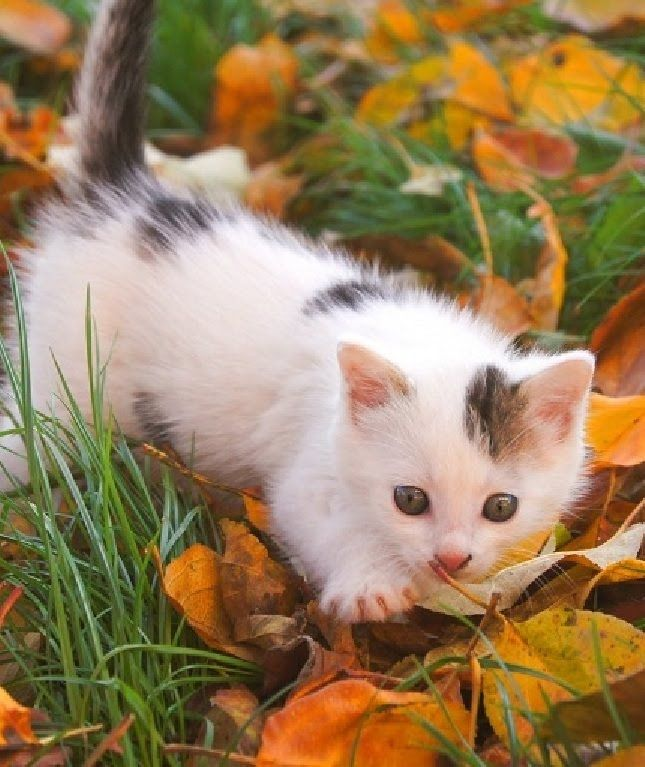 BEST Cute Baby Kittens TOP 1O MORE VIDEOS HERE https//www
