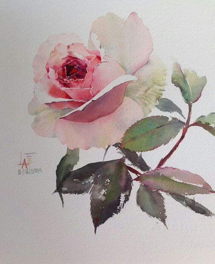 gorgeous watercolor rose lafe aquarellblumen. Black Bedroom Furniture Sets. Home Design Ideas