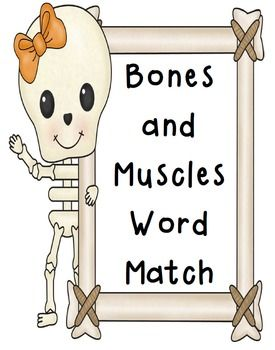 word match worksheets human body skeletal system muscular system skin vocabulary words. Black Bedroom Furniture Sets. Home Design Ideas