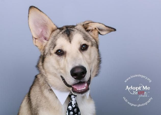 Adopt Griffin On Dog Mixes German Shepherd Dogs Animal Rescue