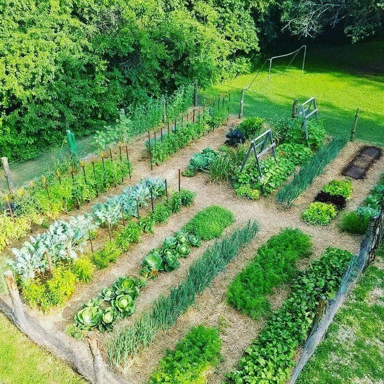 100 top idées pour faire un jardin potager