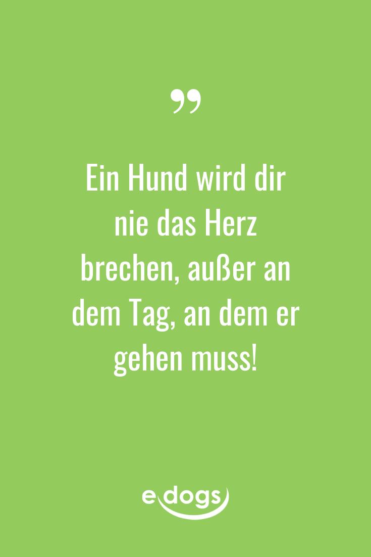Lustige Hundesprüche, inspirierende Zitate, DIY und mehr rund um den Hund findest du bei edogs.de! - Spruch des Tages