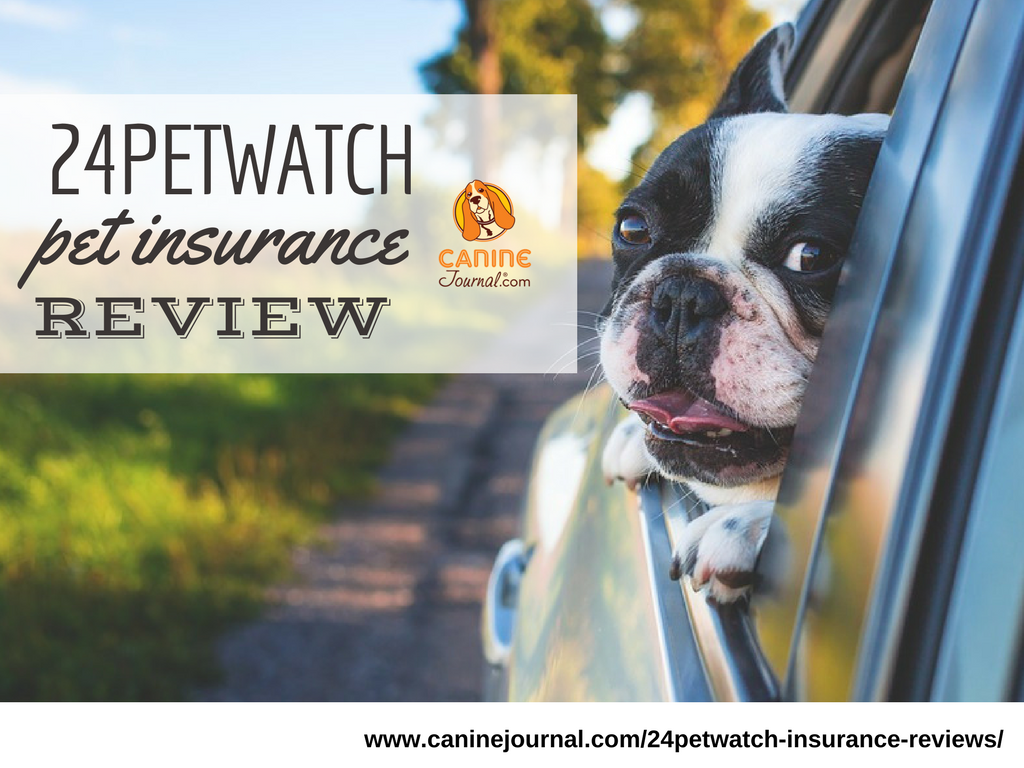 24petwatch Insurance Review A Complicated Claims Process With