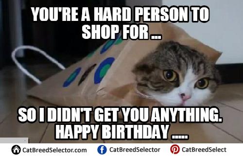 Funny Cat Birthday Meme : Cat meme happy birthday funny cute angry grumpy cats memes