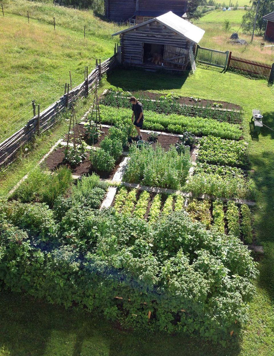20 Inspiring Homestead Farm Garden Layout and Design Ideas | Amazing ...