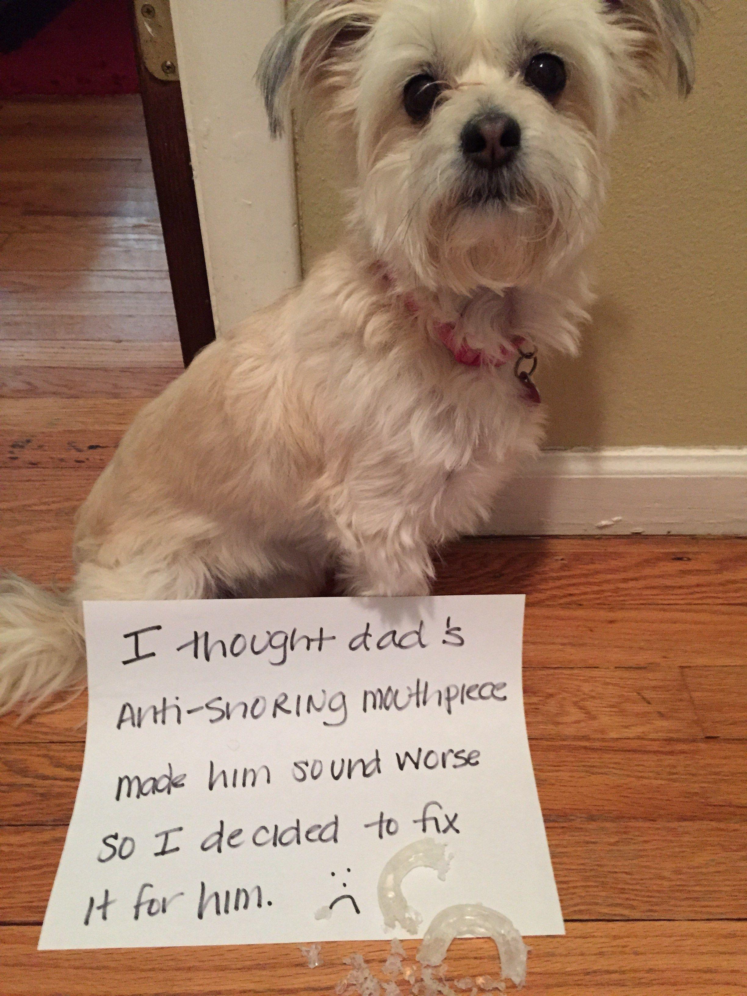20 Most Hilarious Dog Shaming Photos Ever Dog Lovers