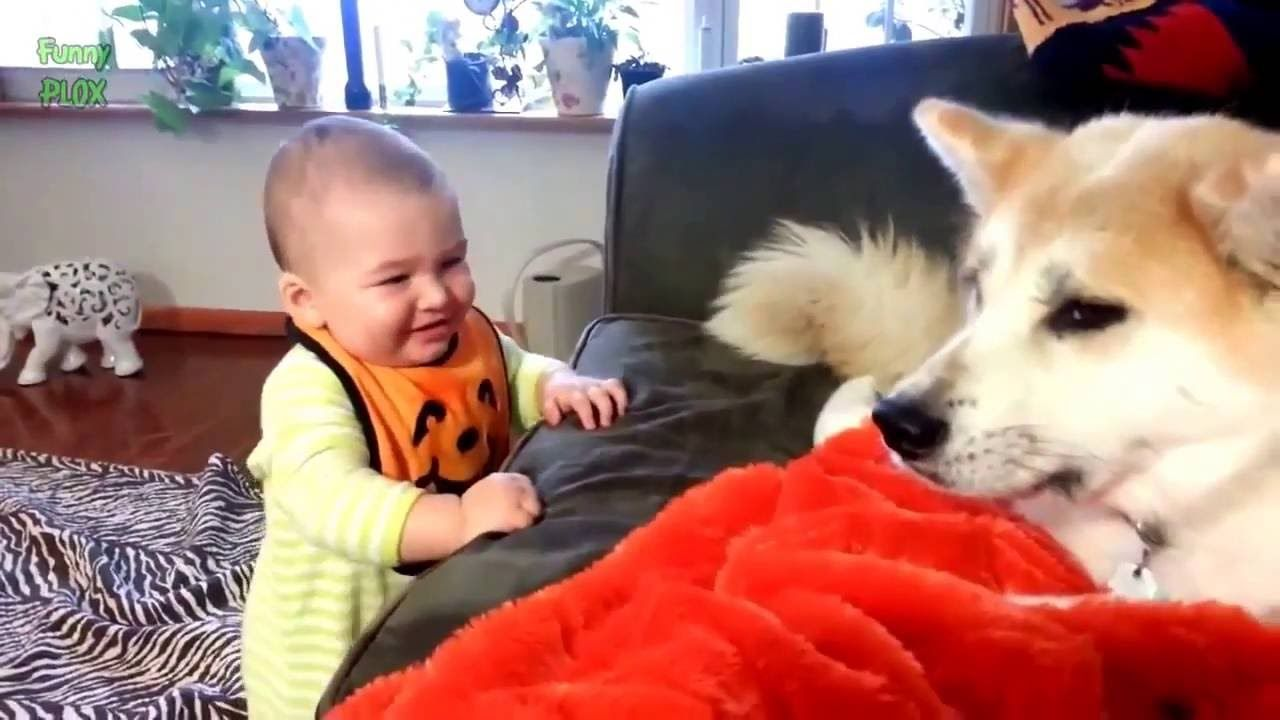 Cats VS Dogs Video] Funny cats Dogs and babies playing to her