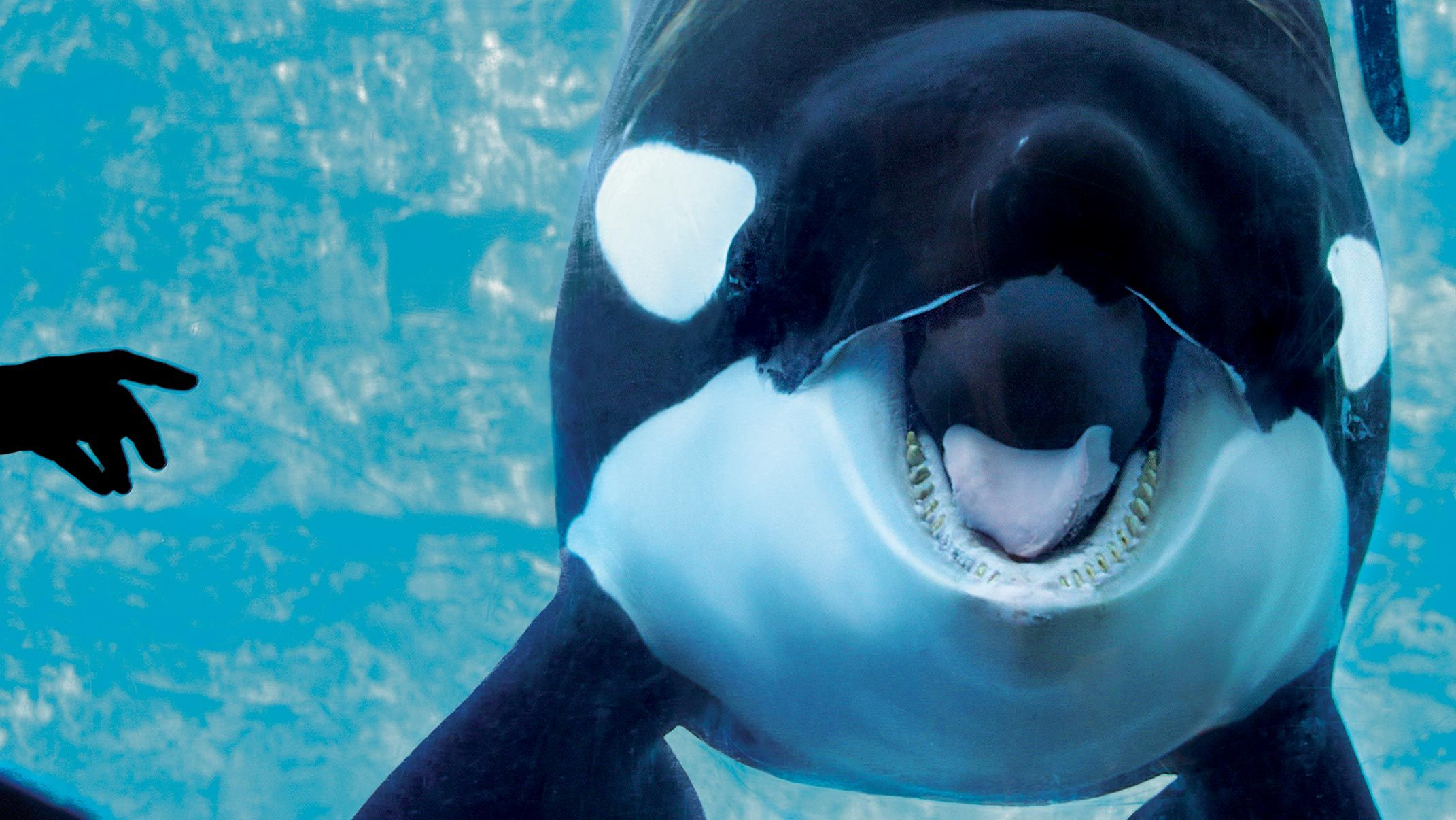 In The Battle At Seaworld The Whales Have Won