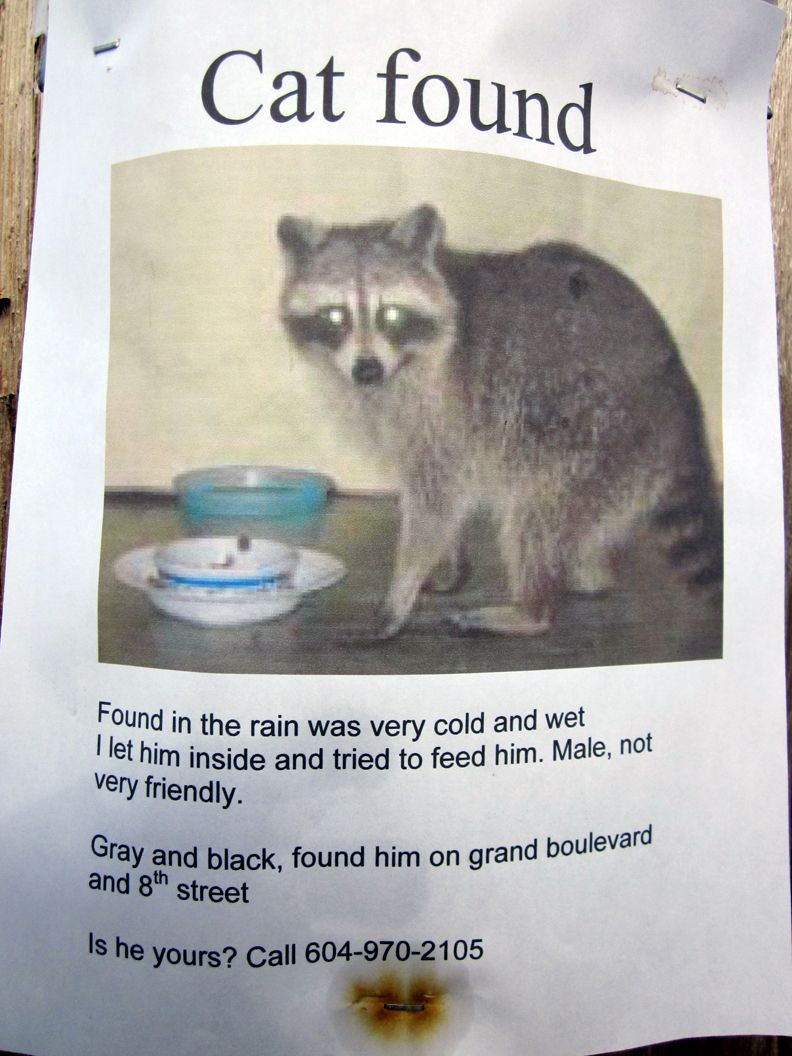 Cat Found poster on tree in North Vancouver Bones