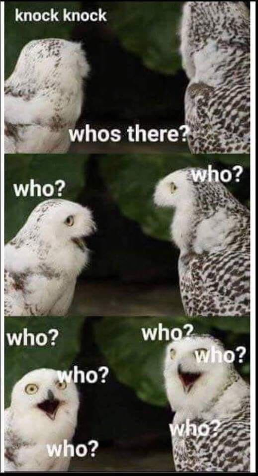Such Fun Funny Animal Memes Animal Memes Animal Jokes