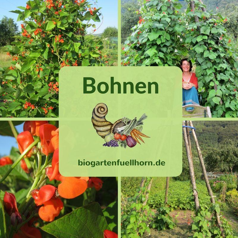 Der Anbau von Bohnen #kräutergartenpalette