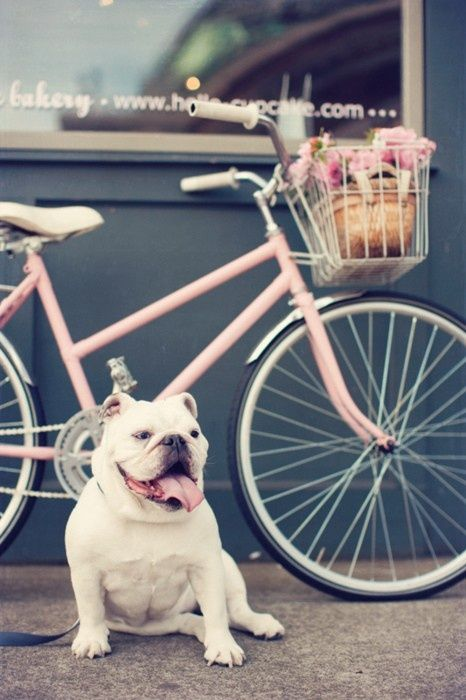 How cute!    #cute #dob #pink #bicyclette#funny #fashion #cool #details #bike    VIA: www.ireneccloset.com