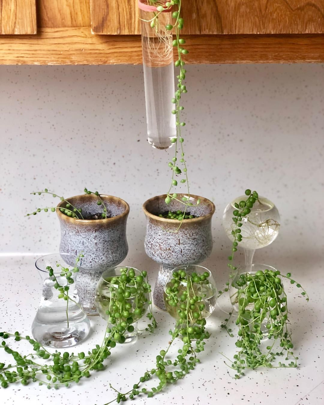 Pin On Easy Plant Propagation