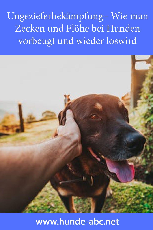 Ungezieferbekampfung Wie Man Zecken Und Flohe Bei Hunden Vorbeugt Und Wieder Loswird In 2020 Flohe Hund Hunde Ungeziefer