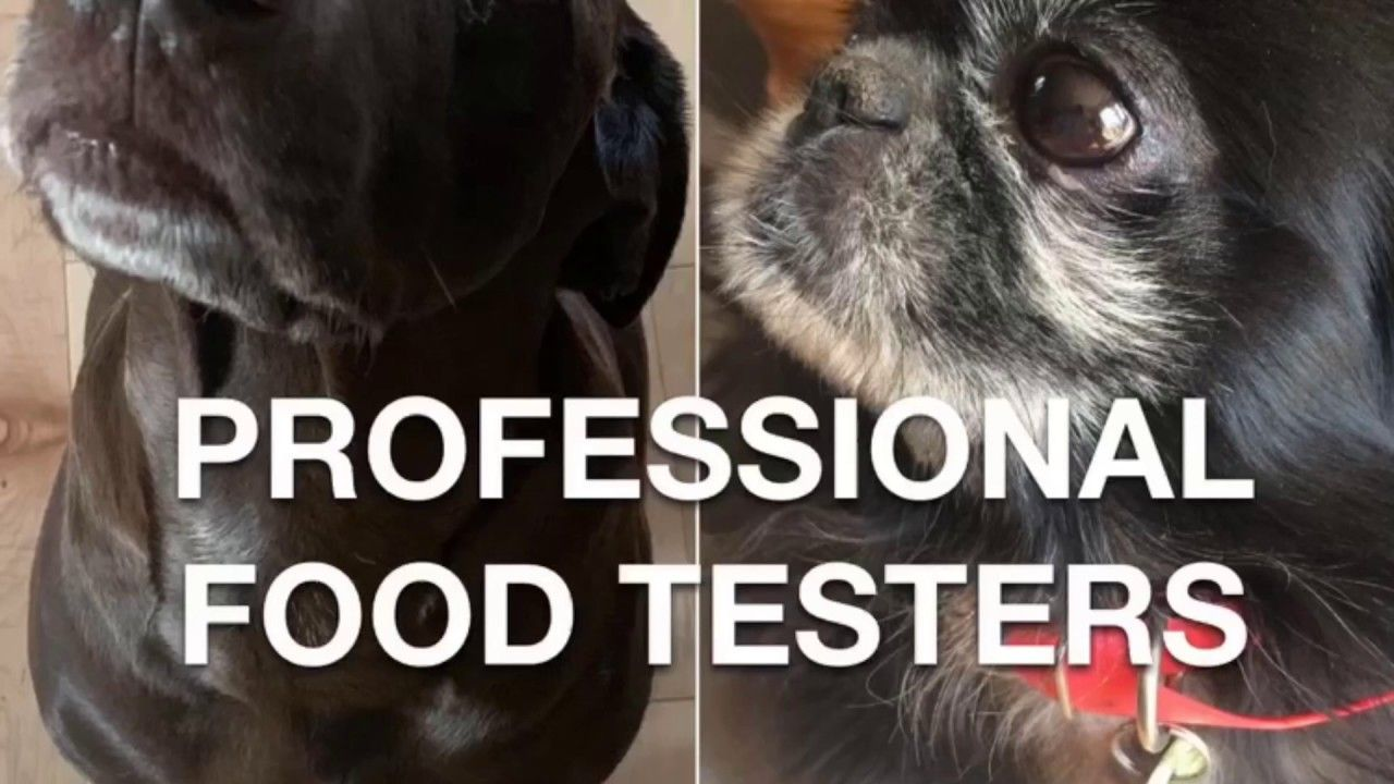 Dog Tasting Challenge Youtube Dogs Challenges Best Friends