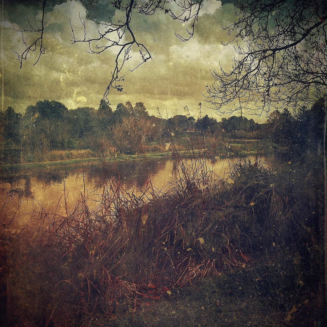 Shoreline #landscape #pond #lake #mobilemasters #retroluxers #retroluxaholics #mobileartistry #mobiography #iphoneart #theappwhisperer #fineartstorage_ampt #the_mobile_arts #art_feeling #artistry_flair #art #ig_artgallery #igcurator #youmobile #mobilephotos by michael_coyne