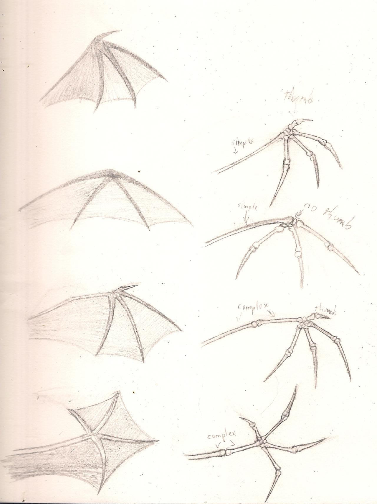 dragon wing anatomy - Google Search | Draw & Paint | Pinterest ...