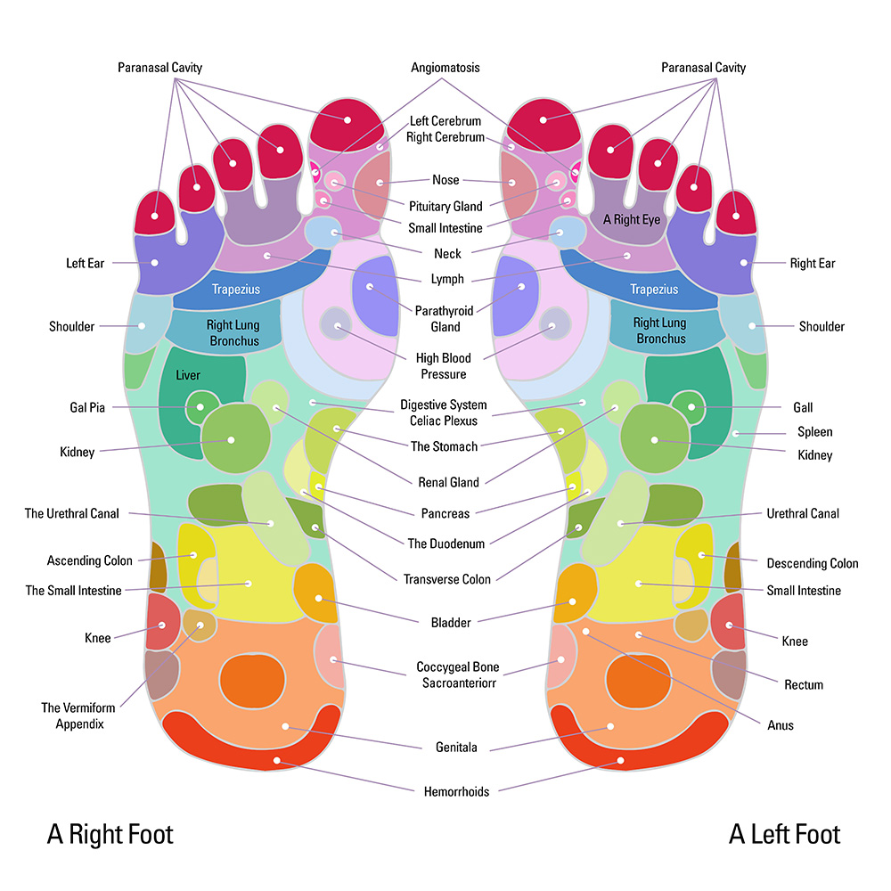 Female Reproductive Reflexology Points Plexus Products Reflexology Celiac Plexus