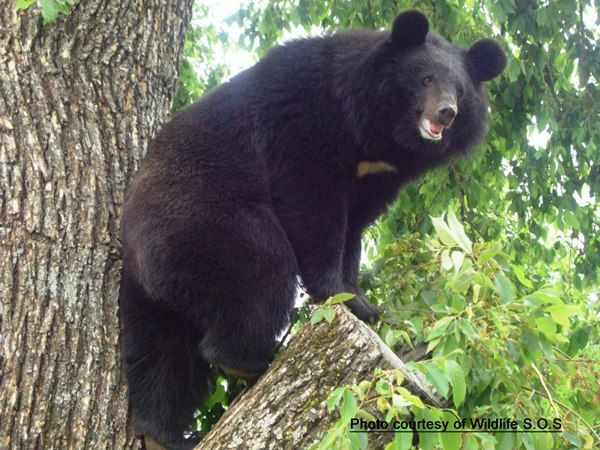 5 Ways You Can Help Animals Asia End Bear Bile Farming - One Green ...